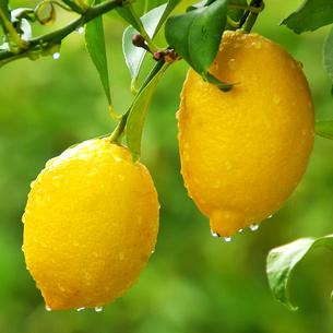 Boost your health and fitness withlemons